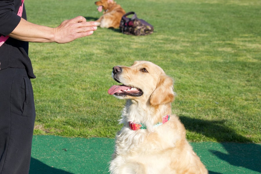 éducation de votre chien