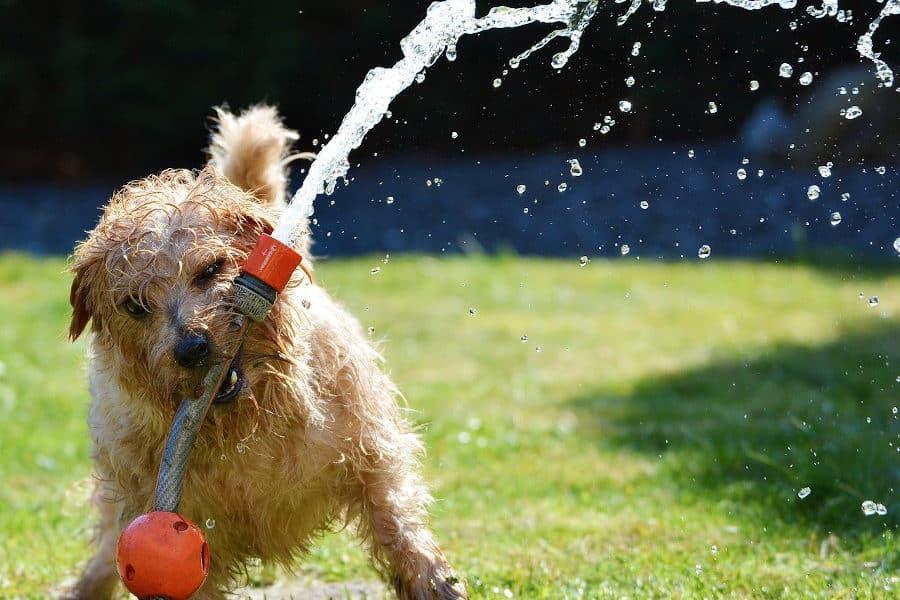 gestion des troubles du comportement du chien